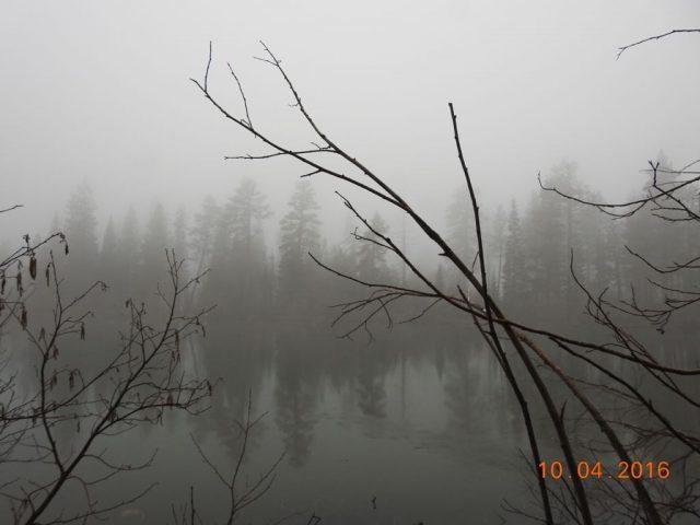 Woods Lake Manzanita