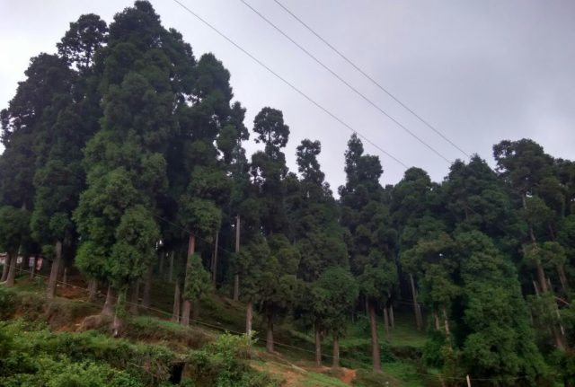Pine forest surrounding Sumendu Lake