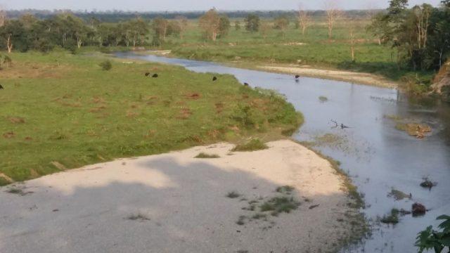 "Animal sighting from ""Jatra Prasad"" watch tower at Gorumara forest"