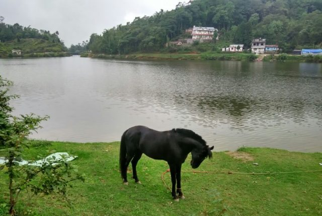 Lone ponny by the side of lake