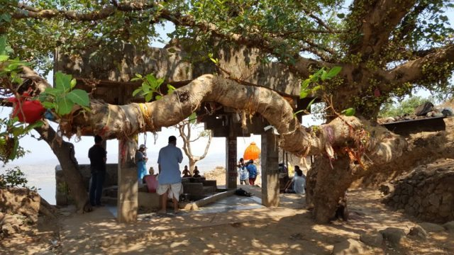 गूलर का वृक्ष जिसके नीचे से गोदावरी निकलती है