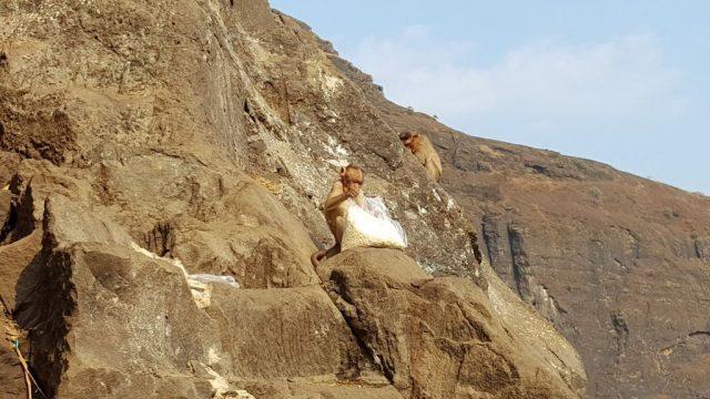पर्वत की सतहों पर दौड़ते बन्दर