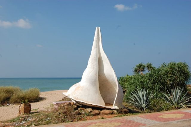 Conch at shangutharai