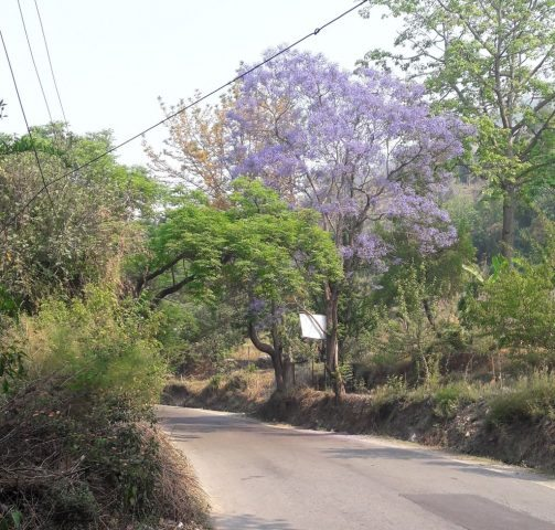 A Beautiful Road in Bhimtal